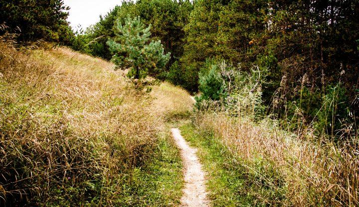 Glacial Hills Natural Pathway