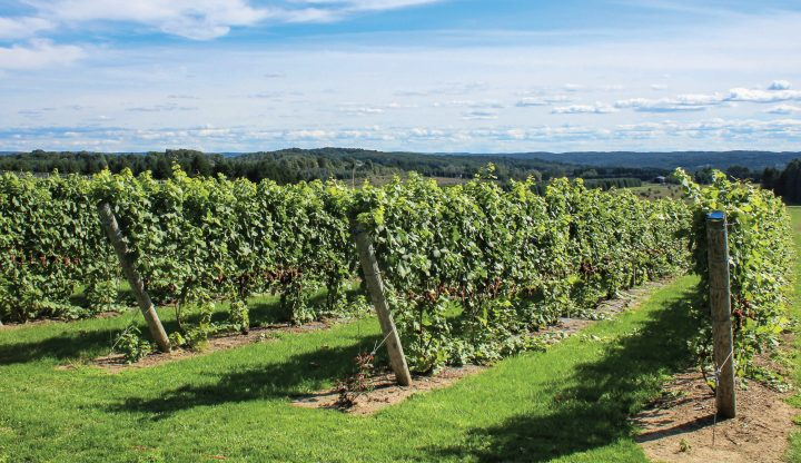 Vineyards at Torch Lake Cellars