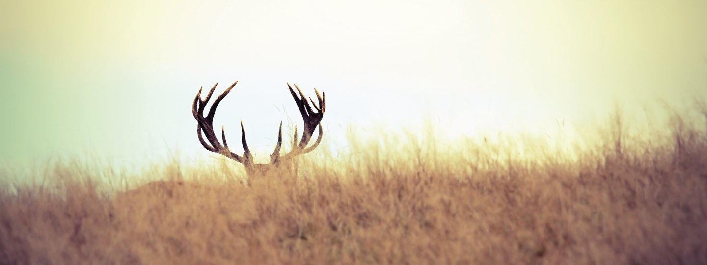 buck antlers over the horizon