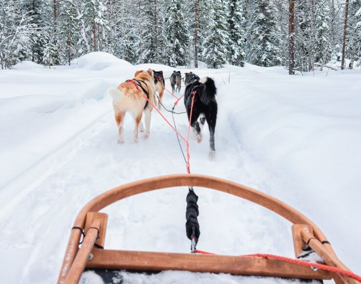 Dog sled rides at Schuss Mtn