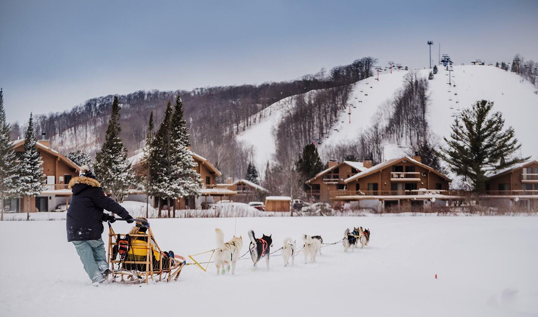 Dogsledding Towards Schuss Mountain